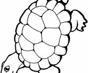 Free coloring and drawings Turtle walking Coloring page