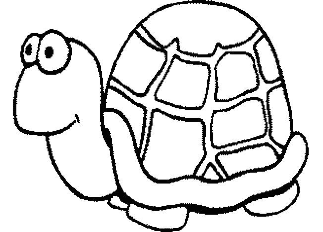 Free coloring and drawings Turtle with a humorous look Coloring page