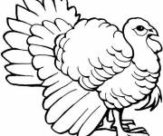Coloring pages Fantastic turkey