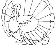 Coloring pages Turkey opening its wings