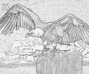 Coloring pages A good image of Vulture