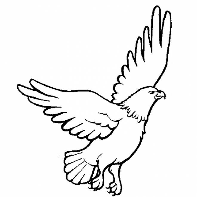 Free coloring and drawings Beautiful vulture Coloring page