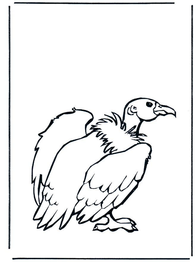 Free coloring and drawings Color vulture Coloring page