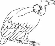 Coloring pages Easy Vulture
