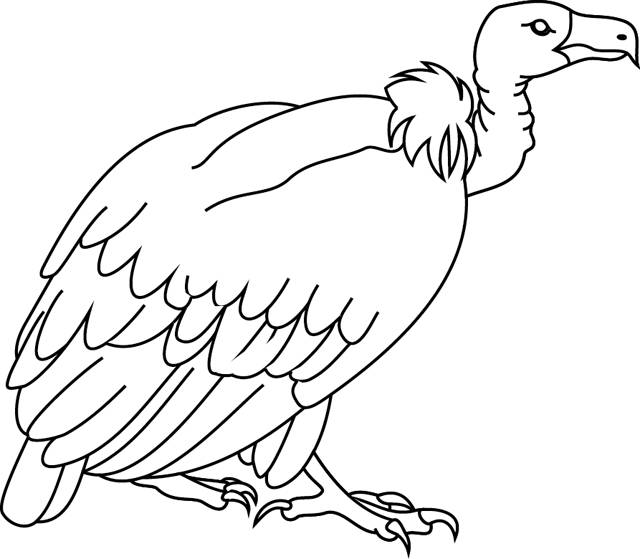 Free coloring and drawings Easy Vulture Coloring page