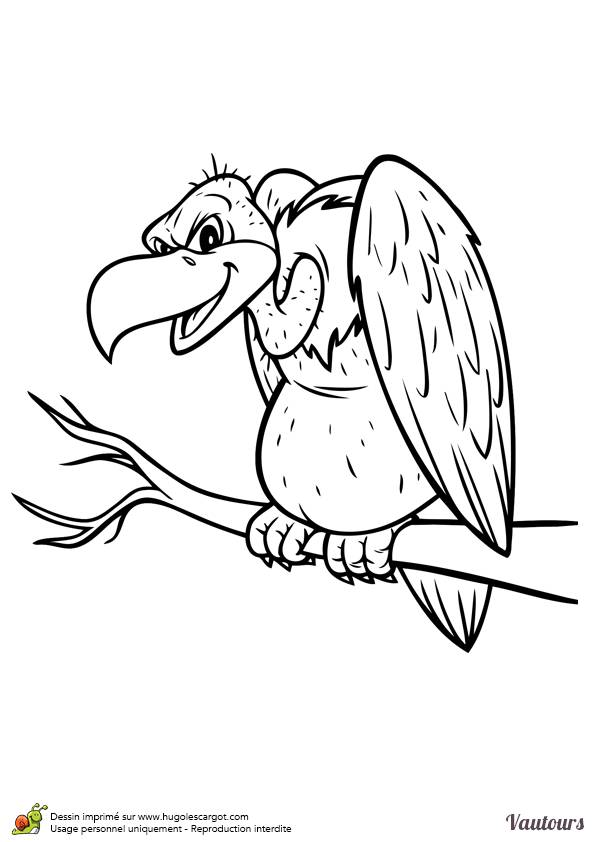 Free coloring and drawings Griffon vulture Coloring page