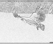 Coloring pages Image of a Vulture in black and white