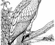 Coloring pages Realistic vulture