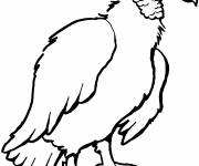 Free coloring and drawings Vector vulture Coloring page