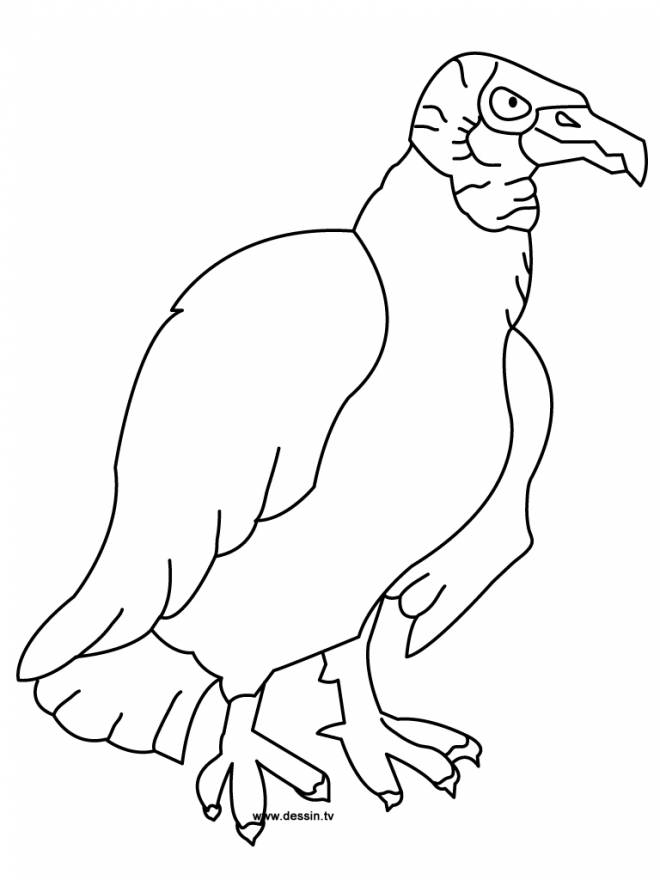 Free coloring and drawings Vulture for child Coloring page