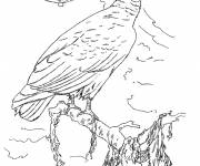 Coloring pages Vulture in pencil