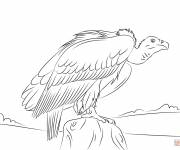 Coloring pages Vulture on rock