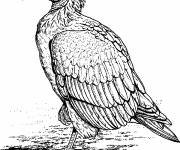 Coloring pages Vulture standing in pencil