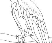 Free coloring and drawings Vulture watching Coloring page