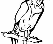 Coloring pages Vulture with small head
