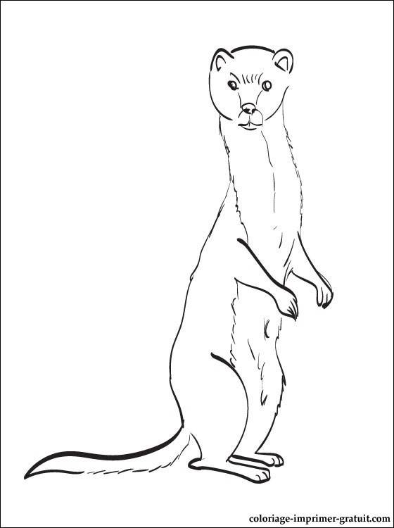 Free coloring and drawings Colored weasel Coloring page