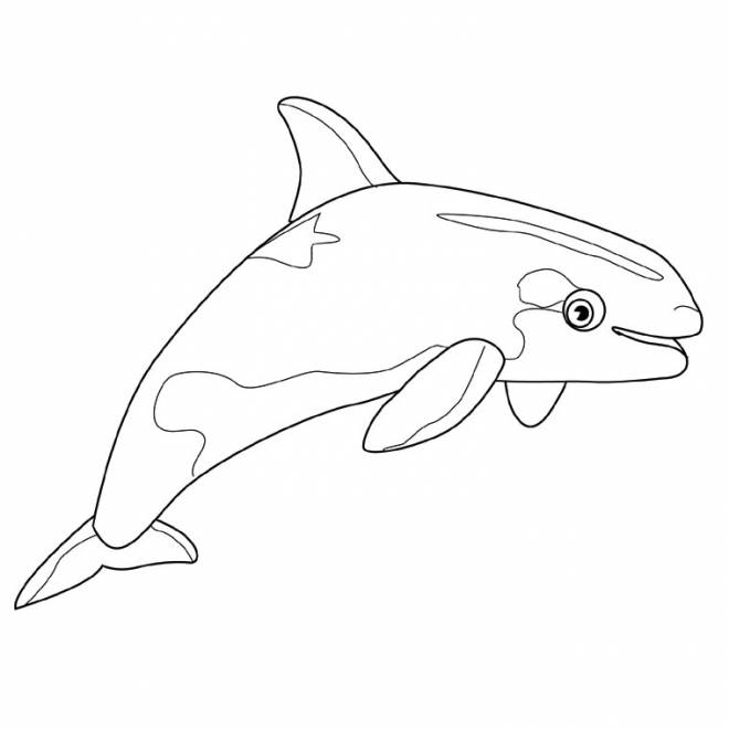 Free coloring and drawings A little whale Coloring page