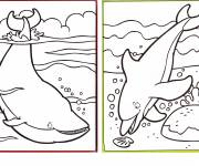 Free coloring and drawings Whale and Dolphin Coloring page