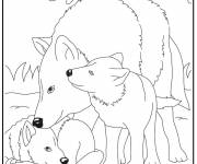 Free coloring and drawings Wolf drawing for kids Coloring page