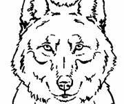 Free coloring and drawings Wolf printable Coloring page