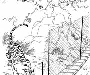 Free coloring and drawings Monkeys passing from tree to tree Coloring page