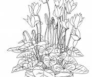 Coloring pages Flowers in nature