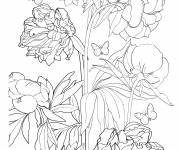 Coloring pages Adult Flower and Butterfly