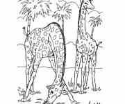 Coloring pages Adult Landscape of Giraffes in Africa