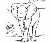 Coloring pages Elephant in Africa