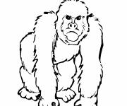Coloring pages Gorilla in Africa