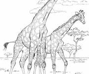 Coloring pages Realistic African Savannah