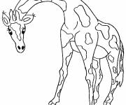 Free coloring and drawings Adult giraffe Coloring page