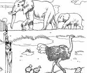 Free coloring and drawings Elephants and ostrich at the Zoo Coloring page