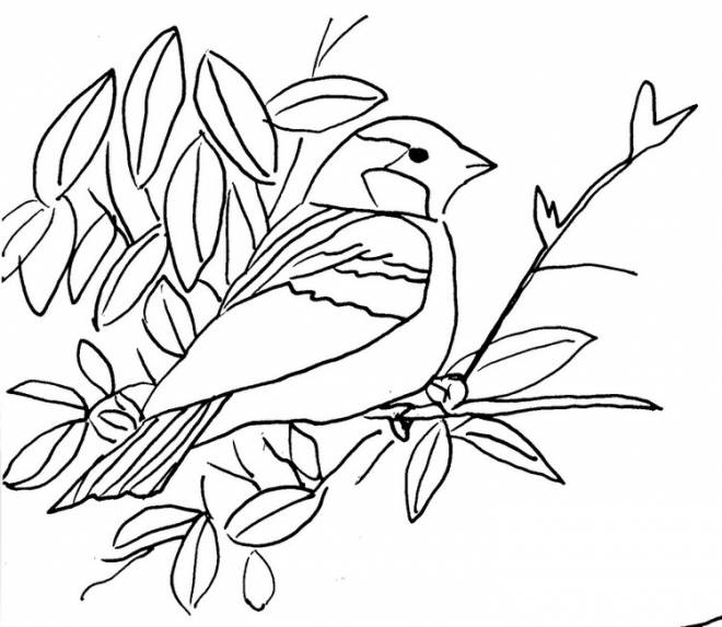 Free coloring and drawings A Bird on a Branch Coloring page