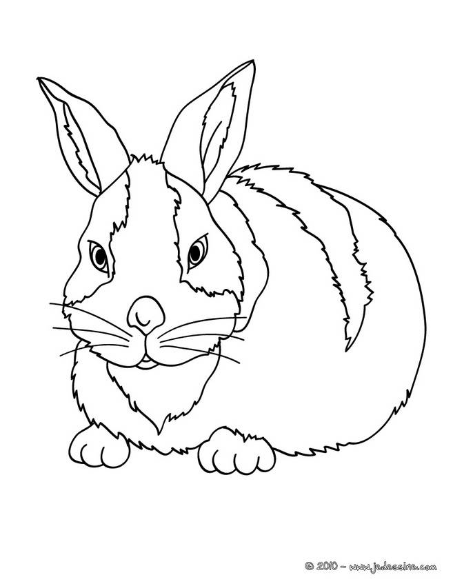 Free coloring and drawings A bunny in color Coloring page