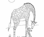 Free coloring and drawings African giraffe Coloring page