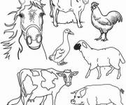 Free coloring and drawings Farm animals Coloring page