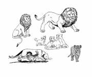 Free coloring and drawings The Lions family Coloring page