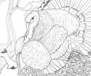 Coloring pages christmas turkey drawing