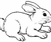 Coloring pages Cute bunny in black and white