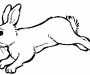 Coloring pages Rabbit running