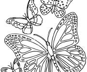 Coloring pages Butterfly Landscape Online
