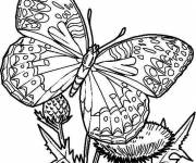 Coloring pages Difficult Butterfly in color