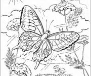 Coloring pages Difficult Butterfly in Nature