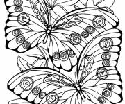 Coloring pages Difficult butterfly vector