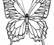 Coloring pages Difficult Front View Butterfly