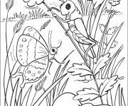 Coloring pages Difficult realistic butterfly