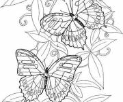 Coloring pages Difficult to decorate butterfly