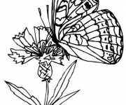Coloring pages Magic Difficult Butterfly