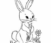 Free coloring and drawings A Rabbit in black and white Coloring page